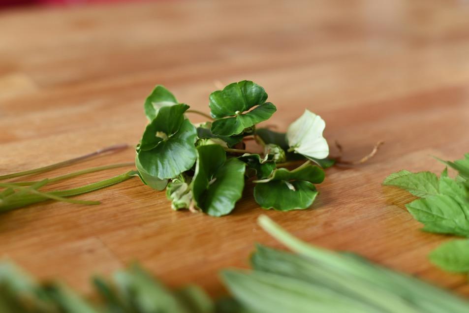 Wildkräuter im Salat